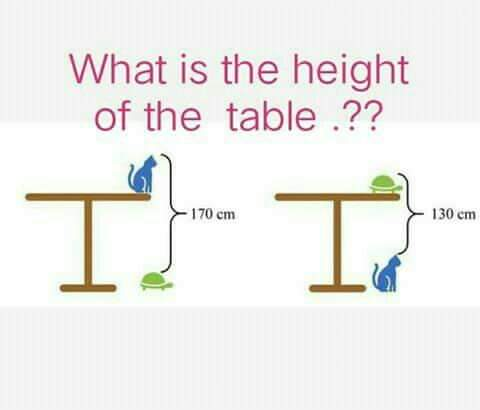 height of the table, cat and tortoise