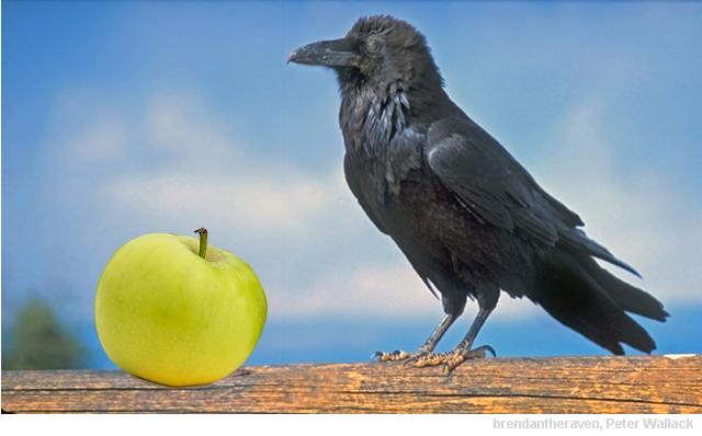 Hempel's Raven Paradox
