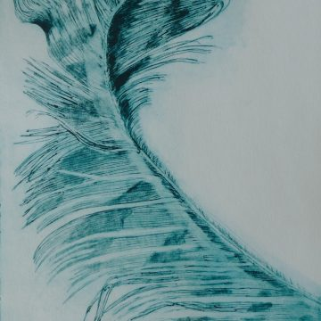"Sweeping Feather by Janis O'Driscoll, Photopolymer Etching 16"" x 11"""