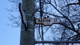Roncesvalles AVe g (24)