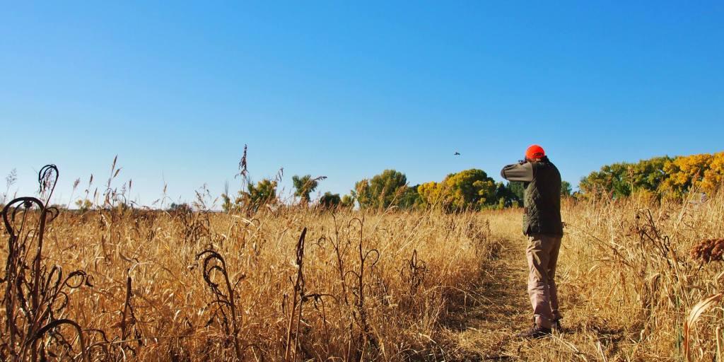 Utah Pheasant Hunting