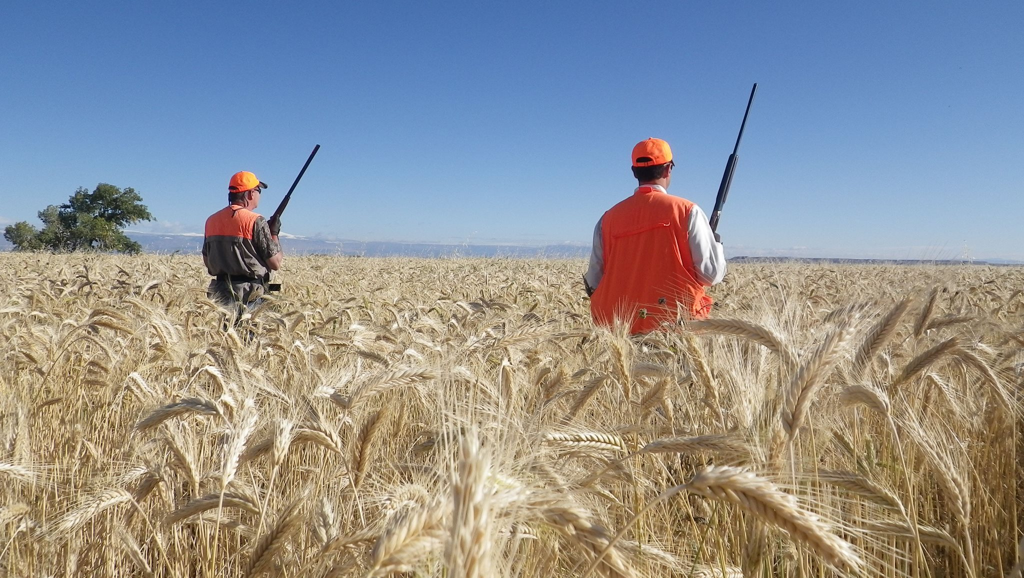Pleasant Valley Pheasant Hunting Club in Utah