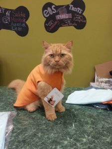Simba wearing PVPE pet clothing