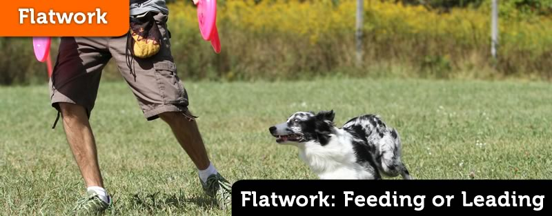 Flatwork – Are You Feeding or Leading?