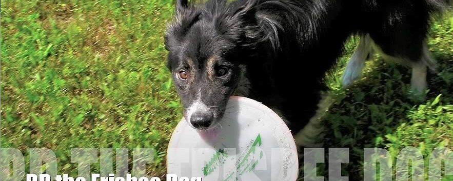 Frisbee Dog Foster – Meet B.B