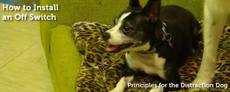 Working Multiple Dogs | Principles for the Distraction Dog
