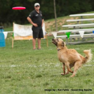 dog leaping for target
