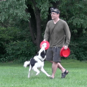 Border Collie Bitework