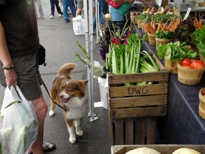 dog on leash at farmer's market