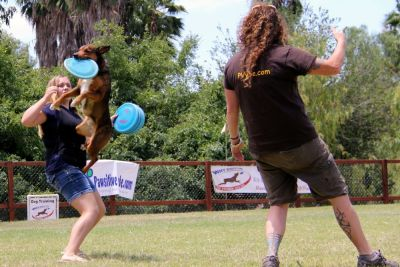 disc dog camp instruction