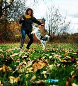 Disc Dog Freestyle Dog Catch