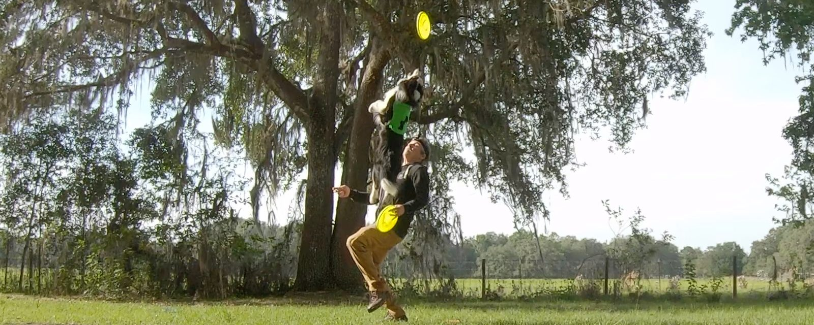 On Disc Dog Vaulting   Timing Is NOT Your Problem