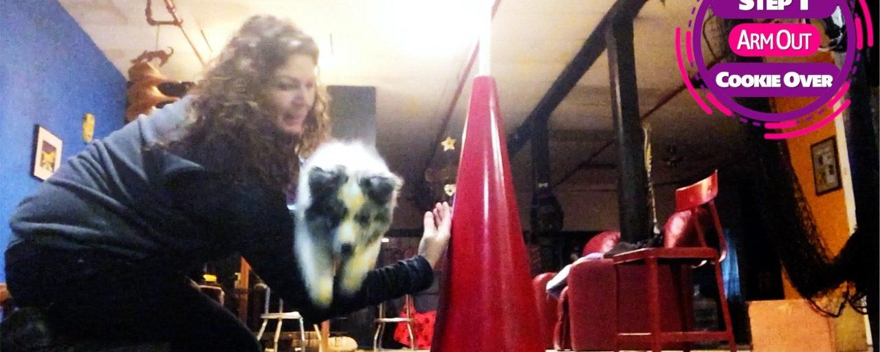 Disc Dog Puppy Videos in Playlist Format