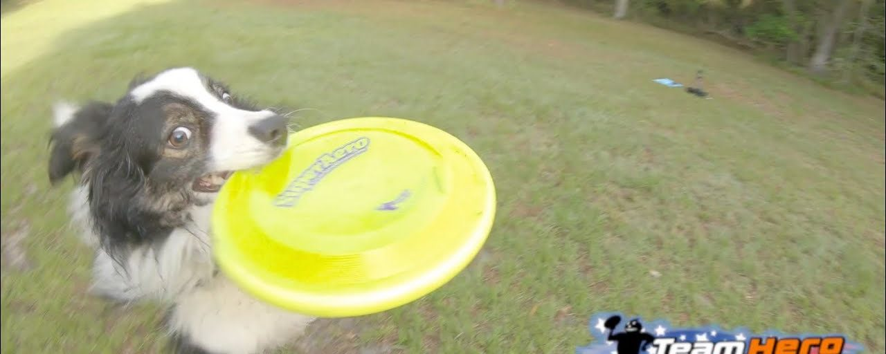 DiscDogger Weekly #8 | DiscDog Games & Disc Quan Do Forms