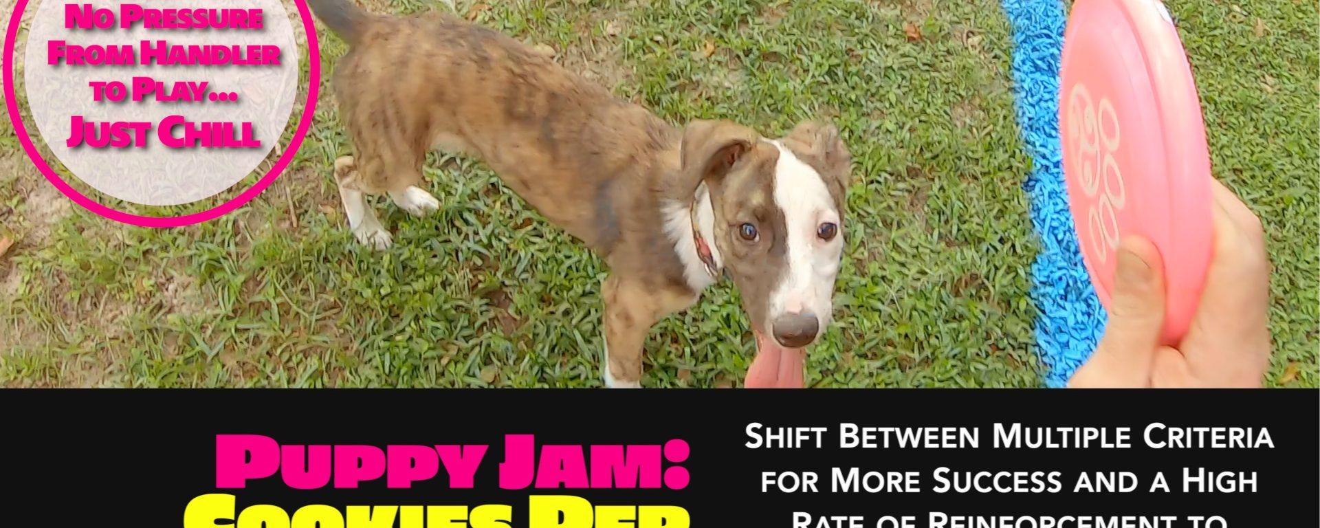 Puppy's First Disc Dog Jam | Zappa the GrassHoppa