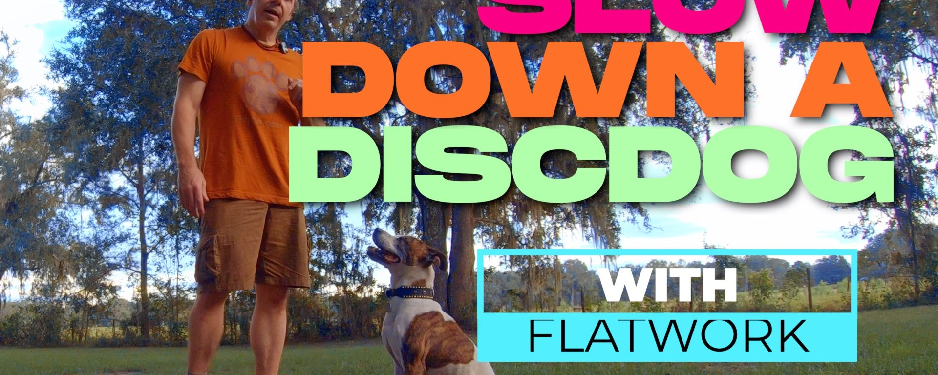 Slowing Down a Disc Dog with Team Movement & Flatwork