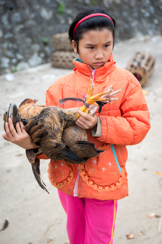 A girl attempts to sell her chicken, in the Bac Ha market, outside Sapa, Vietnam.