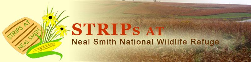 Iowa State STRIPs