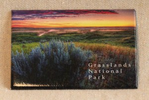 Robert Postma Magnet Sagebrush in Grasslands National Park