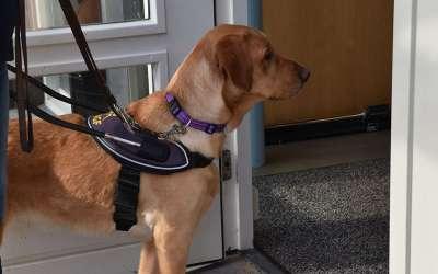 KNGF Geleidehonden doet onderzoek naar toegankelijkheid