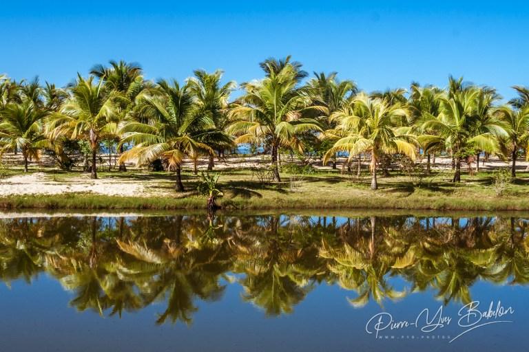 Palm grove reflection