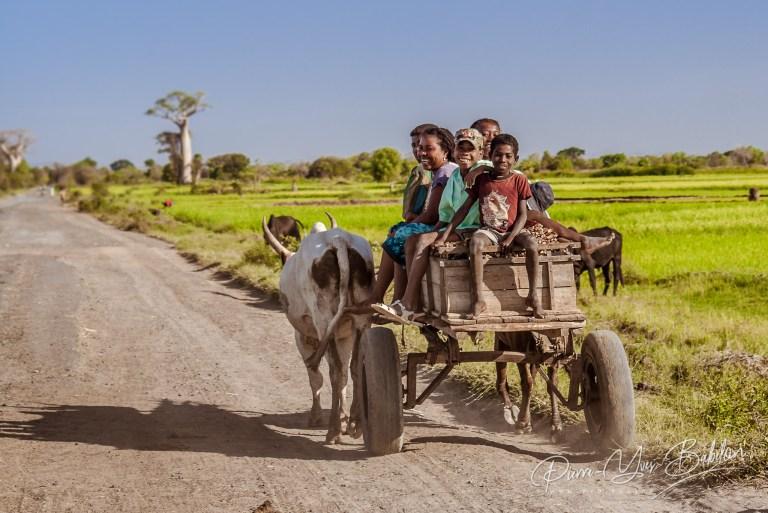 Personnes de Madagascar dans leur charrette à zébus