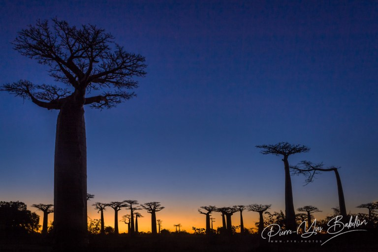 Coucher de soleil sur l'allée des Baobabs