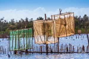 Fish traps on the Pangalanes Canal, eastern Madagascar