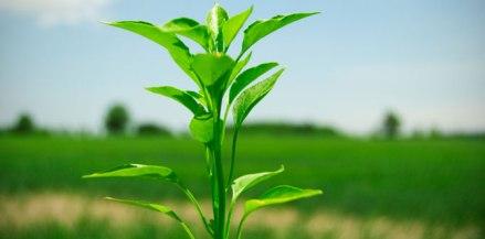 greenvirals