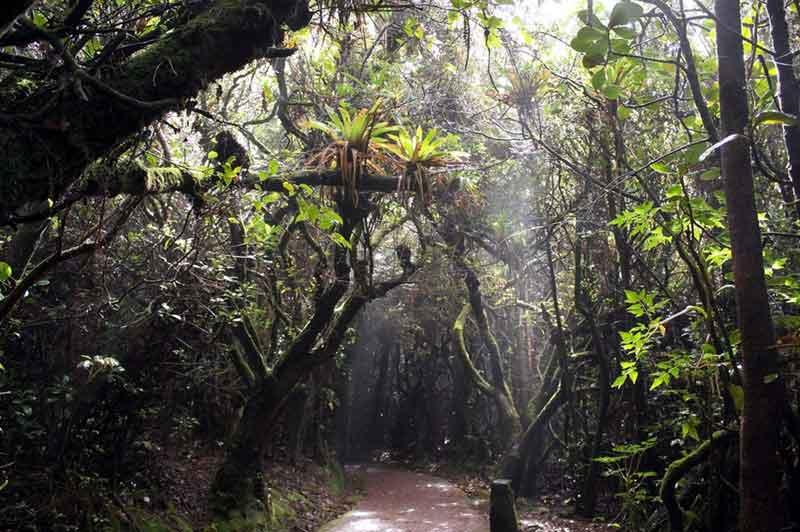 Regen- und Nebelwald am Aufstieg zum Poás.