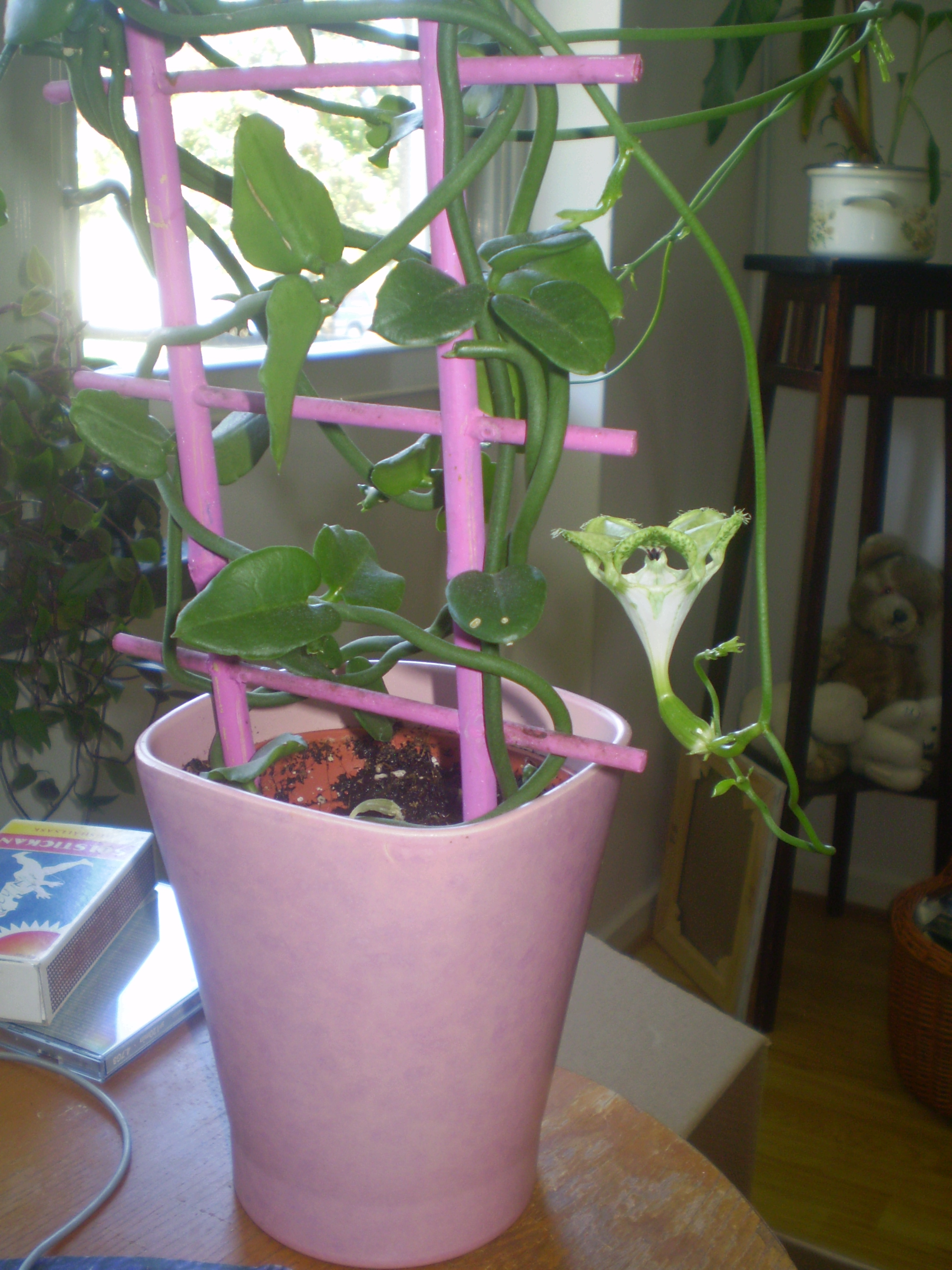 Växter 003