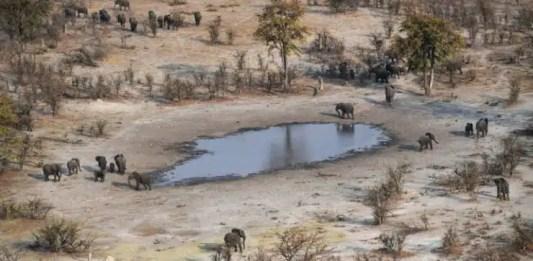 elefantes muertos Botsuana