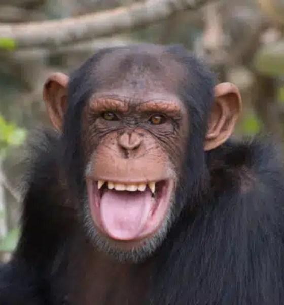 Científicos crean embrión híbrido de Hombre y mono