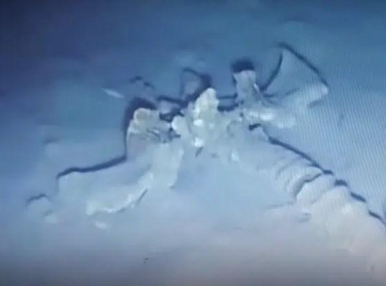 esqueleto gigante de 30 metros en océano