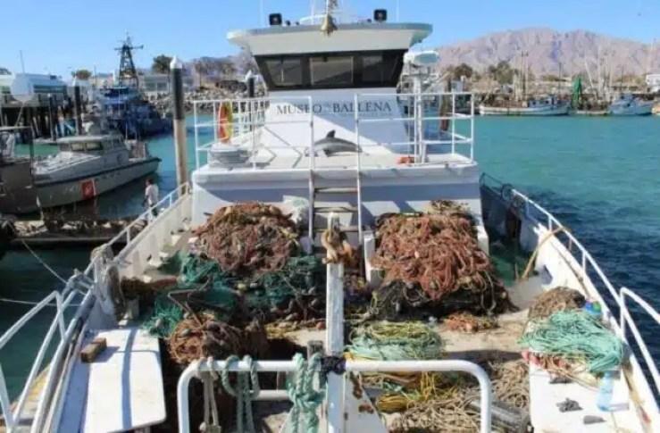Pesca ilegal de 'cocaína de marina' amenaza especies raras y causa conflicto en México