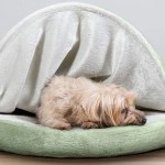 17 Best Dog Beds 2021 The Strategist New York Magazine