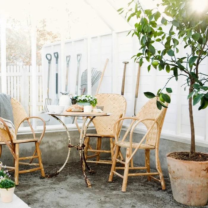 7 best indoor fruit trees lemon lime