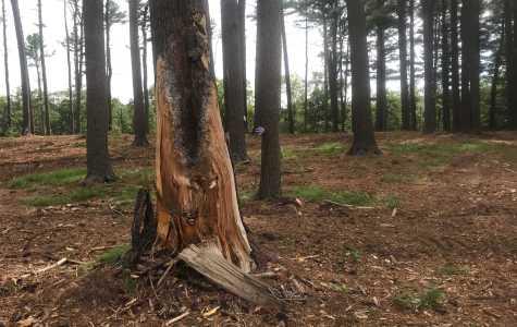 Quinnipiac continues tornado cleanup
