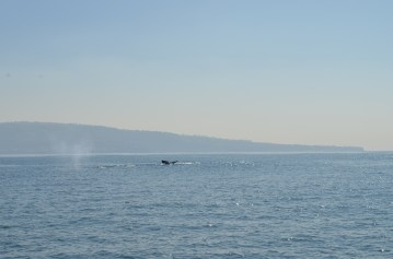 whale-watching-48