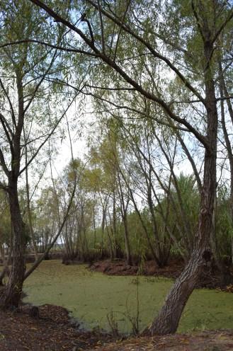 Les bayous qui entourent les plantations sont des barrières naturelles qui rendent pratiquement impossible toute tentative d'évasion
