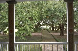 L'allée de chênes menait directement aux rives du Mississippi