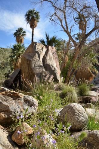 Murray Canyon (33)