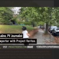 PFIZER - Vanessa Gelman, directrice scientifique pique un sprint lorsqu'un journaliste de ProjectVeritas veut l'interroger