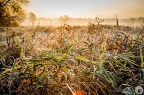 autumn grass II
