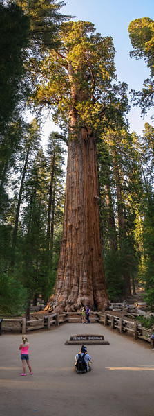General Sherman tree, Sequoia & Kings Canyon National Park. Largest tree in the world.