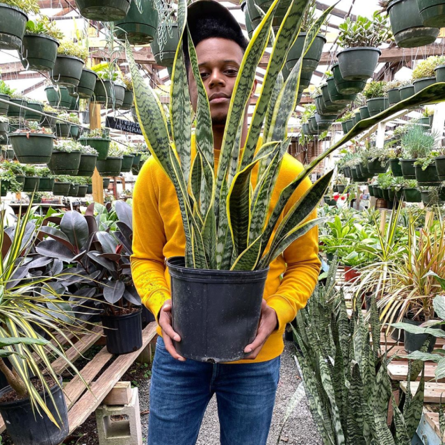 Barry-Greene-with-plant-Stretch