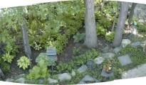 hosta-garden