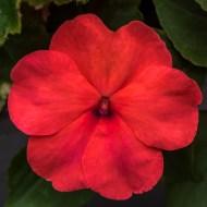 Flowers BackYard-2