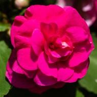 Flowers BackYard-26