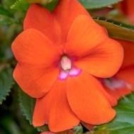 Flowers BackYard-4